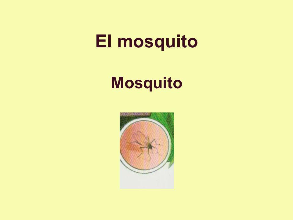 El mosquito Mosquito