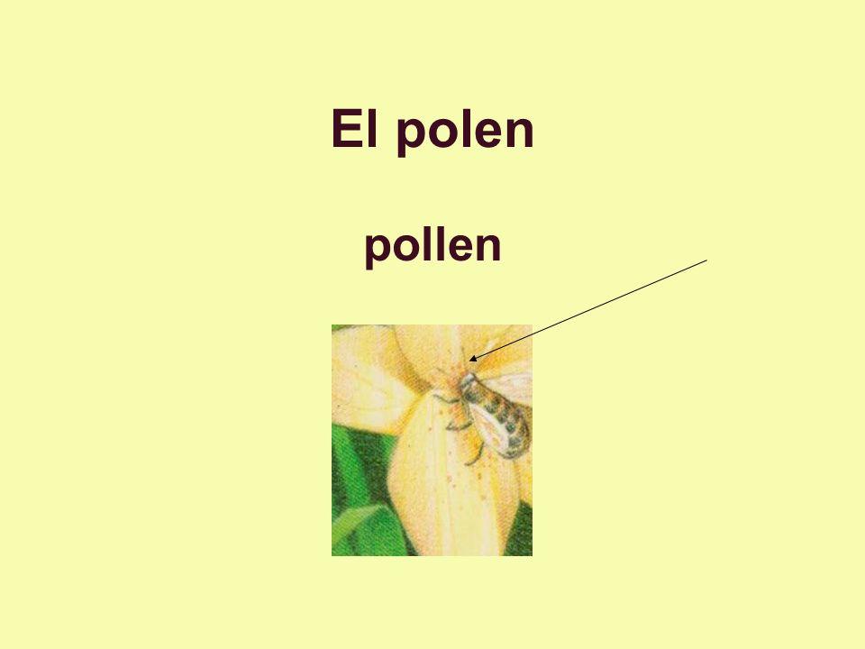 El polen pollen