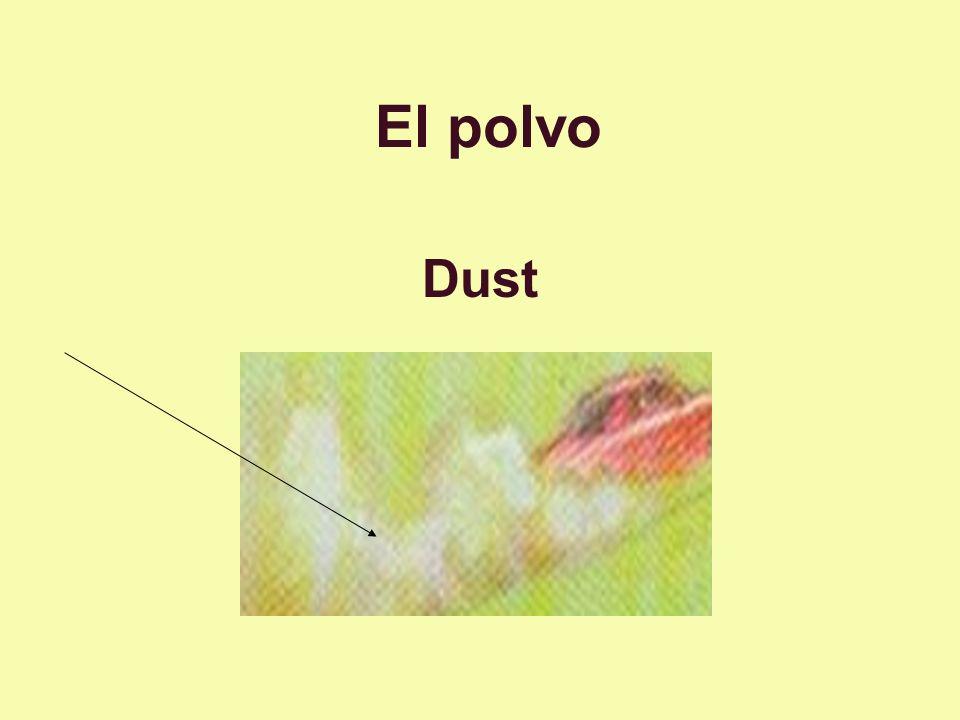 El polvo Dust