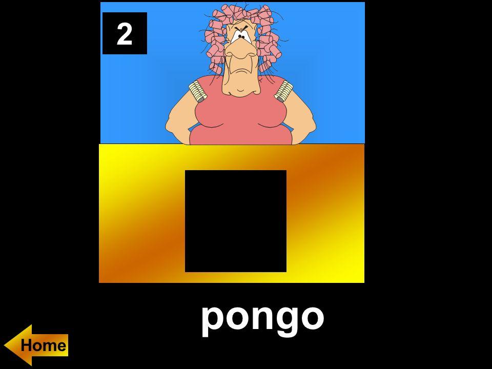 2 pongo