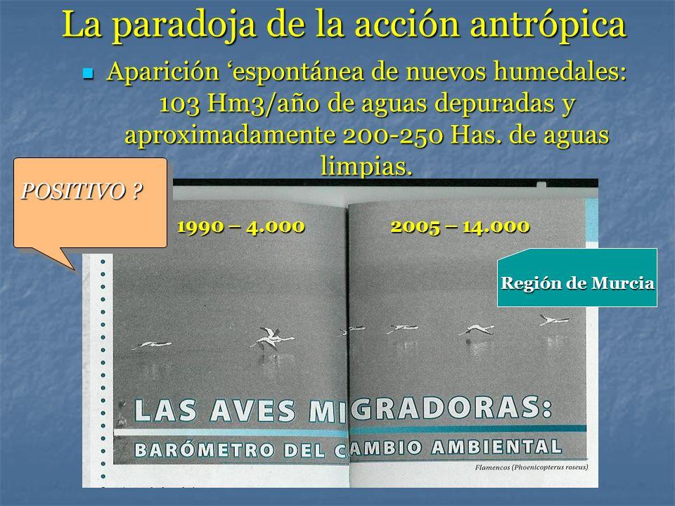 La paradoja de la acción antrópica Aparición espontánea de nuevos humedales: 103 Hm3/año de aguas depuradas y aproximadamente 200-250 Has. de aguas li
