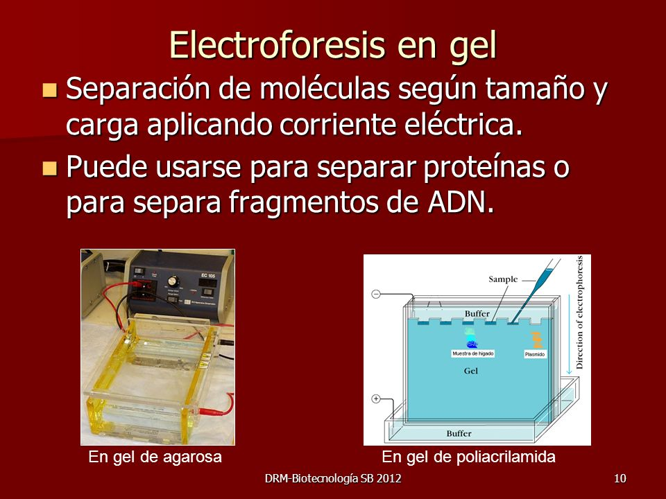 DRM-Biotecnología SB 201210 Electroforesis en gel Separación de moléculas según tamaño y carga aplicando corriente eléctrica. Separación de moléculas