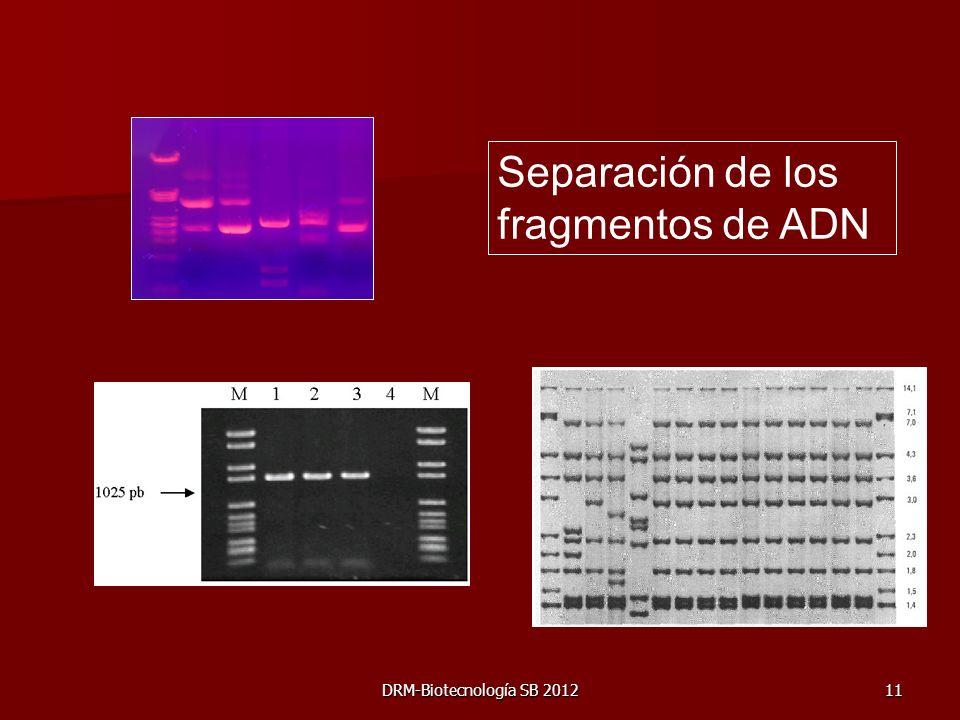 DRM-Biotecnología SB 201211 Separación de los fragmentos de ADN