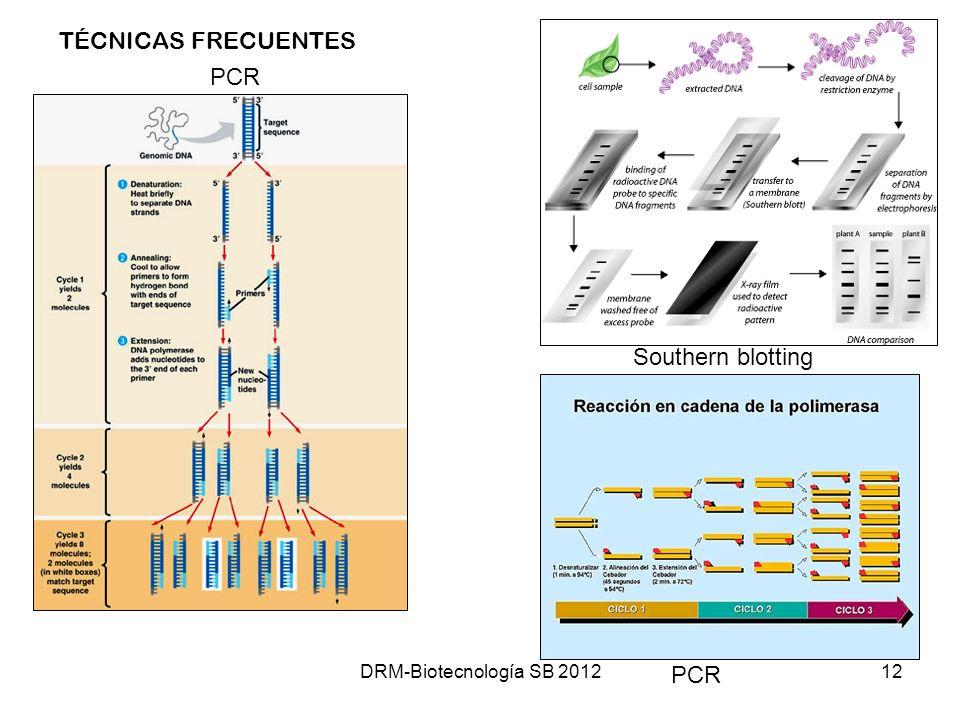 DRM-Biotecnología SB 201212 PCR Southern blotting PCR TÉCNICAS FRECUENTES