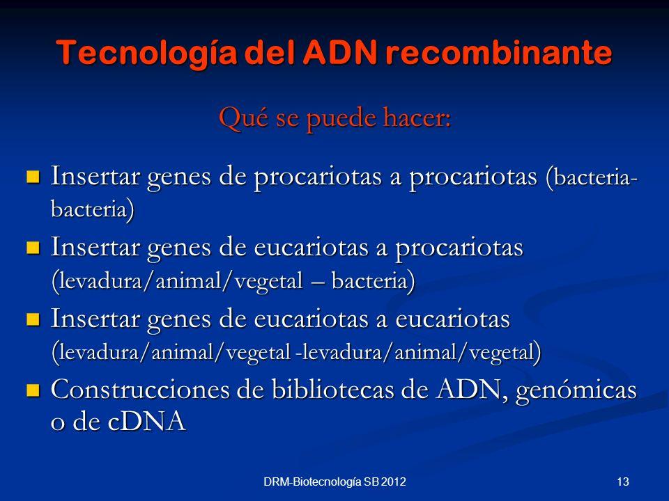 13DRM-Biotecnología SB 2012 Tecnología del ADN recombinante Qué se puede hacer: Insertar genes de procariotas a procariotas ( bacteria- bacteria ) Ins