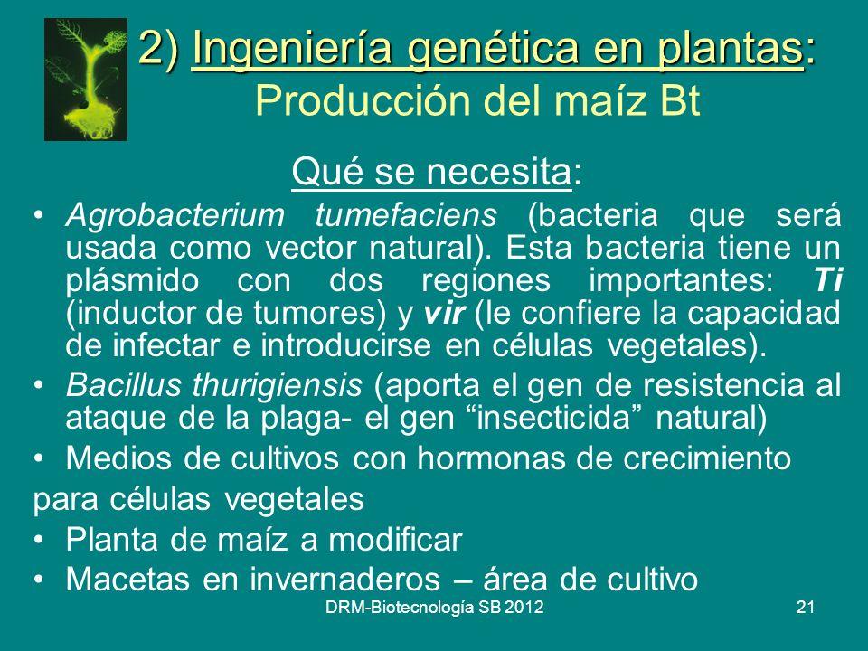 DRM-Biotecnología SB 201221 2) Ingeniería genética en plantas: 2) Ingeniería genética en plantas: Producción del maíz Bt Qué se necesita: Agrobacteriu