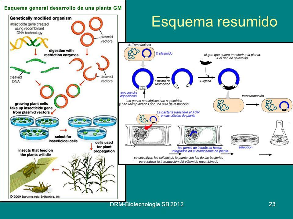 DRM-Biotecnología SB 201223 Esquema resumido