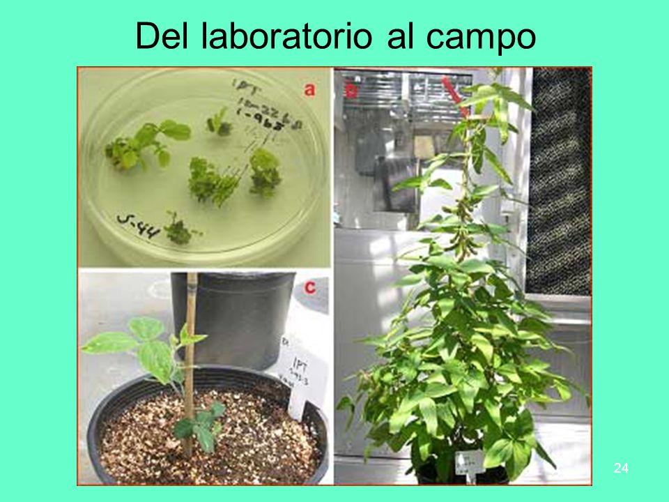 DRM-Biotecnología SB 201224 Del laboratorio al campo