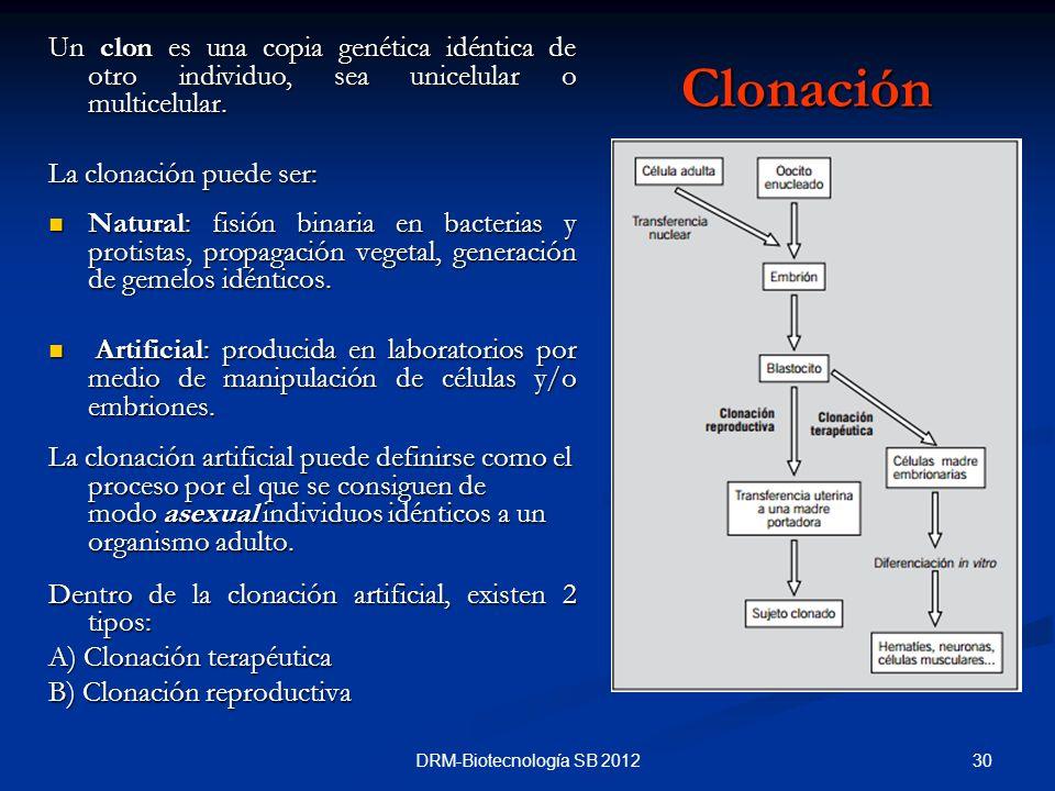 30DRM-Biotecnología SB 2012 Clonación Un clon es una copia genética idéntica de otro individuo, sea unicelular o multicelular. La clonación puede ser:
