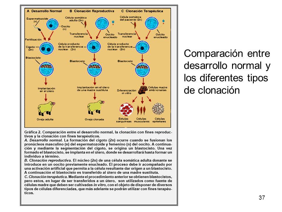 DRM-Biotecnología SB 201237 Comparación entre desarrollo normal y los diferentes tipos de clonación