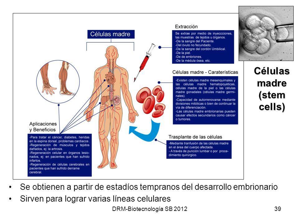 DRM-Biotecnología SB 201239 Células madre (stem cells) Se obtienen a partir de estadíos tempranos del desarrollo embrionario Sirven para lograr varias