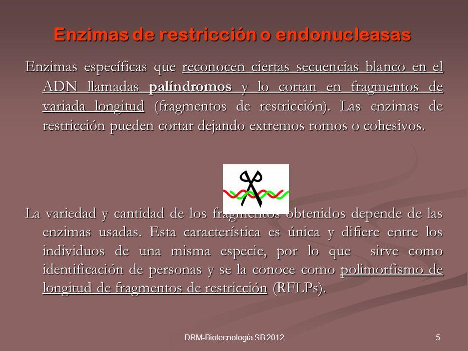 5DRM-Biotecnología SB 2012 Enzimas de restricción o endonucleasas Enzimas específicas que reconocen ciertas secuencias blanco en el ADN llamadas palín