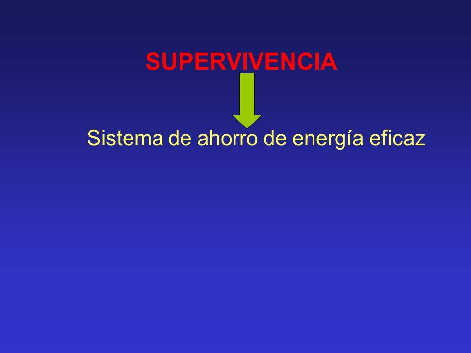 SUPERVIVENCIA Sistema de ahorro de energía eficaz GRASA (Tejido adiposo)