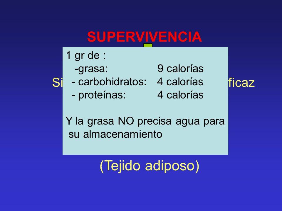 Síndrome metabólico.
