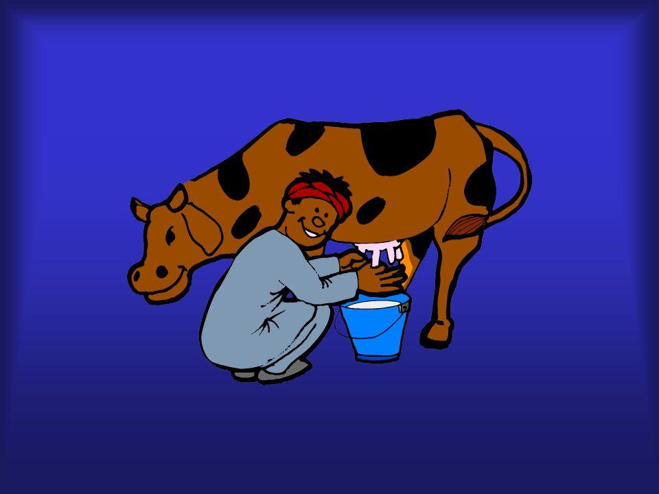 vaca, leche