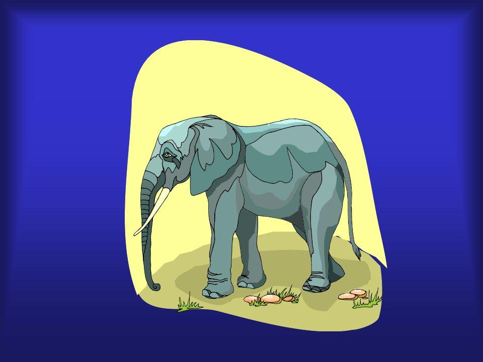 elefante, grande