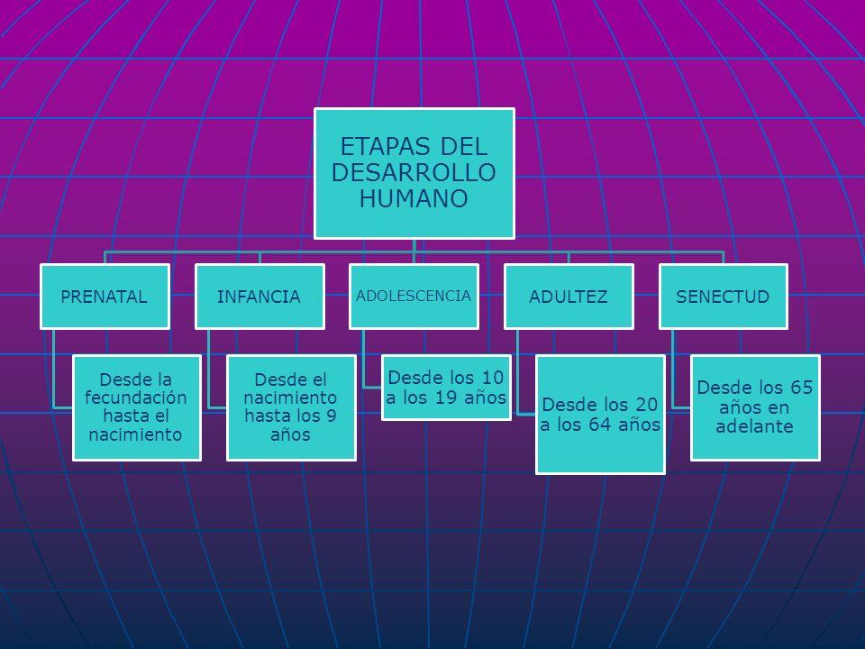 ETAPAS DEL DESARROLLO HUMANO PRENATAL Desde la fecundación hasta el nacimiento INFANCIA Desde el nacimiento hasta los 9 años ADOLESCENCIA Desde los 10