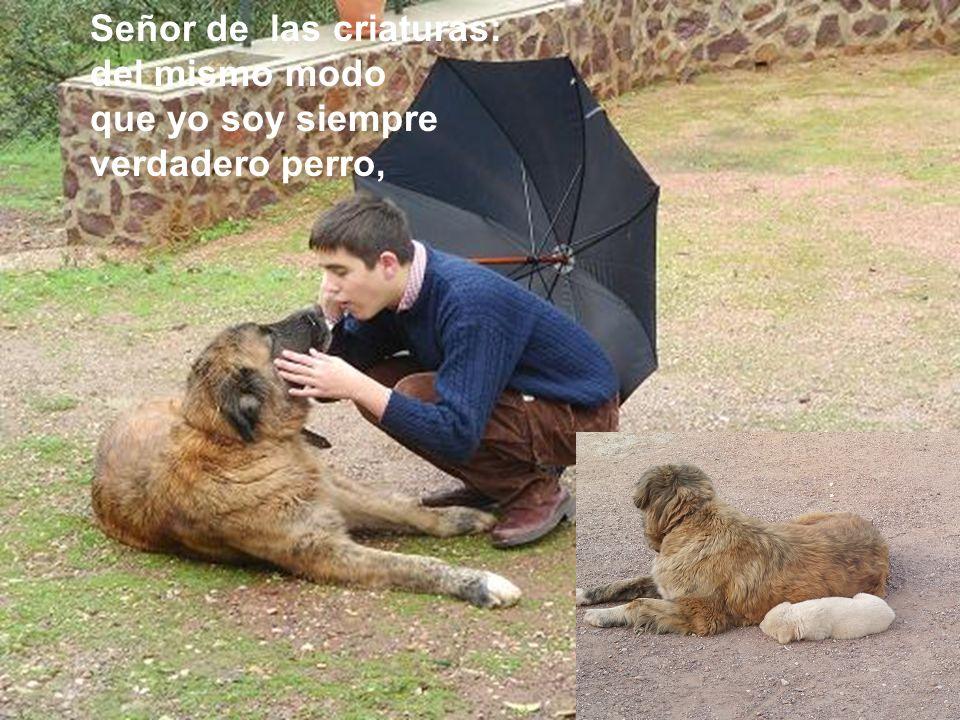 Señor de las criaturas: del mismo modo que yo soy siempre verdadero perro,