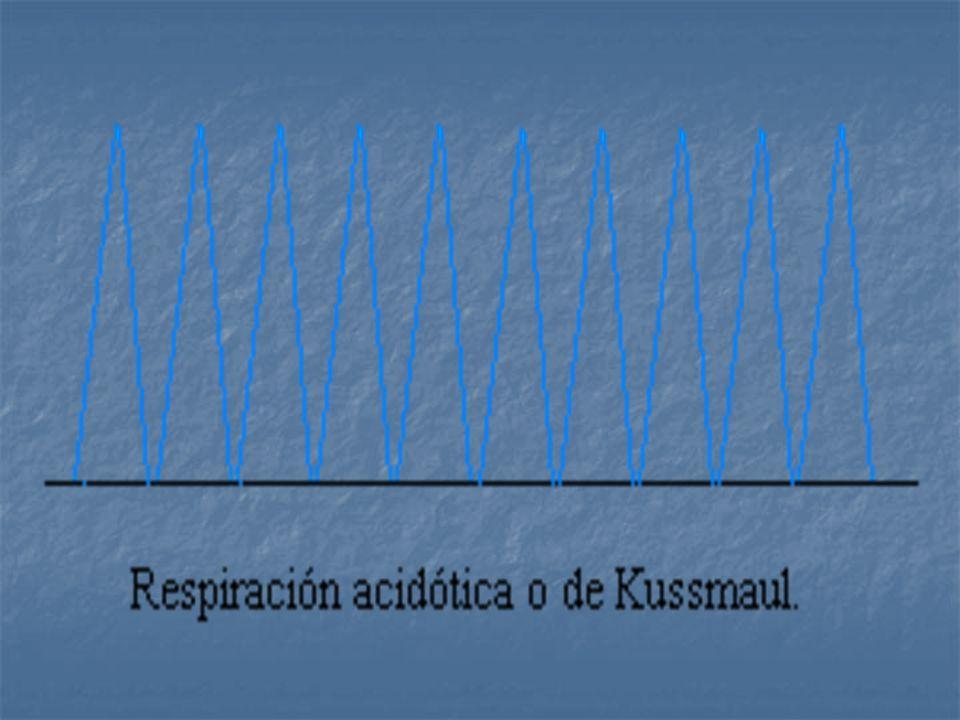 Hipernea: Aumento anormal de la profundidad y frecuencia de los movimientos respiratorios. Kussmaul: Respiraciones rápidas profundas y sin pausas. Ort