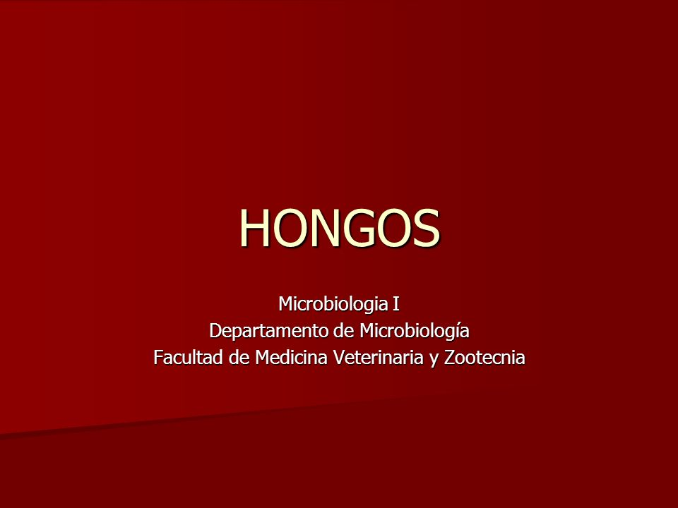 HONGOS Microbiologia I Departamento de Microbiología Facultad de Medicina Veterinaria y Zootecnia
