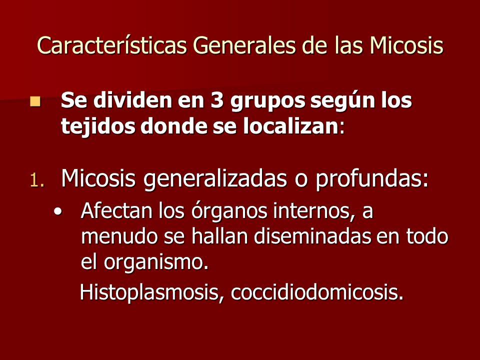 Características Generales de las Micosis Se dividen en 3 grupos según los tejidos donde se localizan: Se dividen en 3 grupos según los tejidos donde s