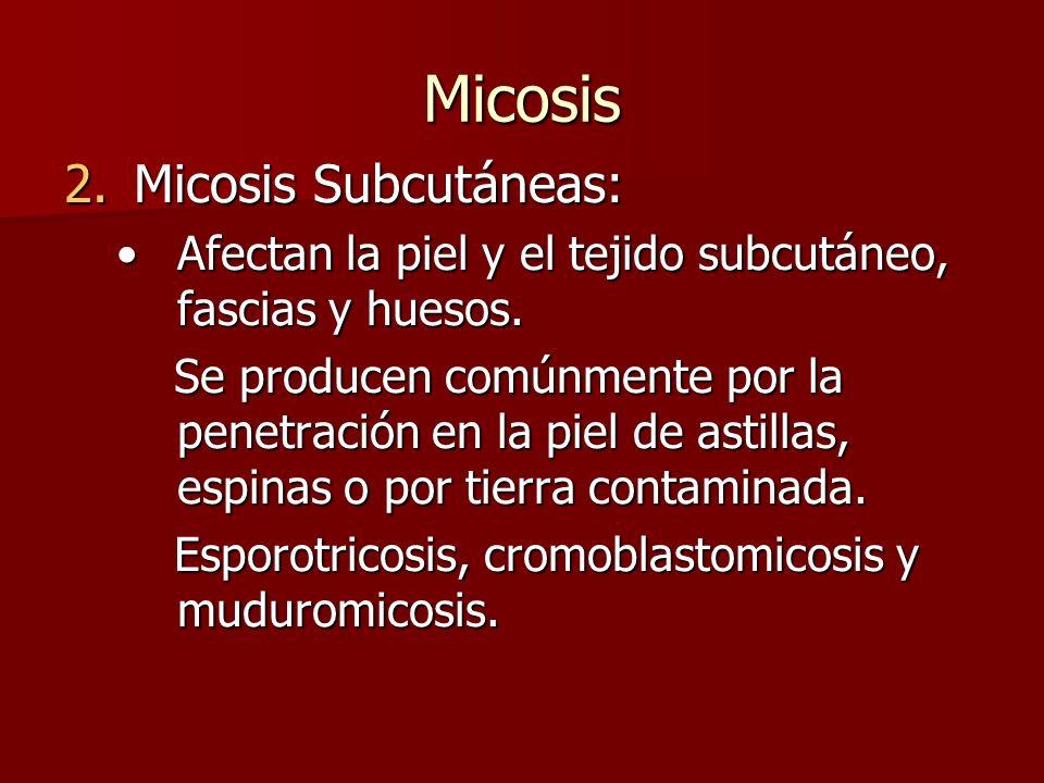 Micosis 2.Micosis Subcutáneas: Afectan la piel y el tejido subcutáneo, fascias y huesos.Afectan la piel y el tejido subcutáneo, fascias y huesos. Se p