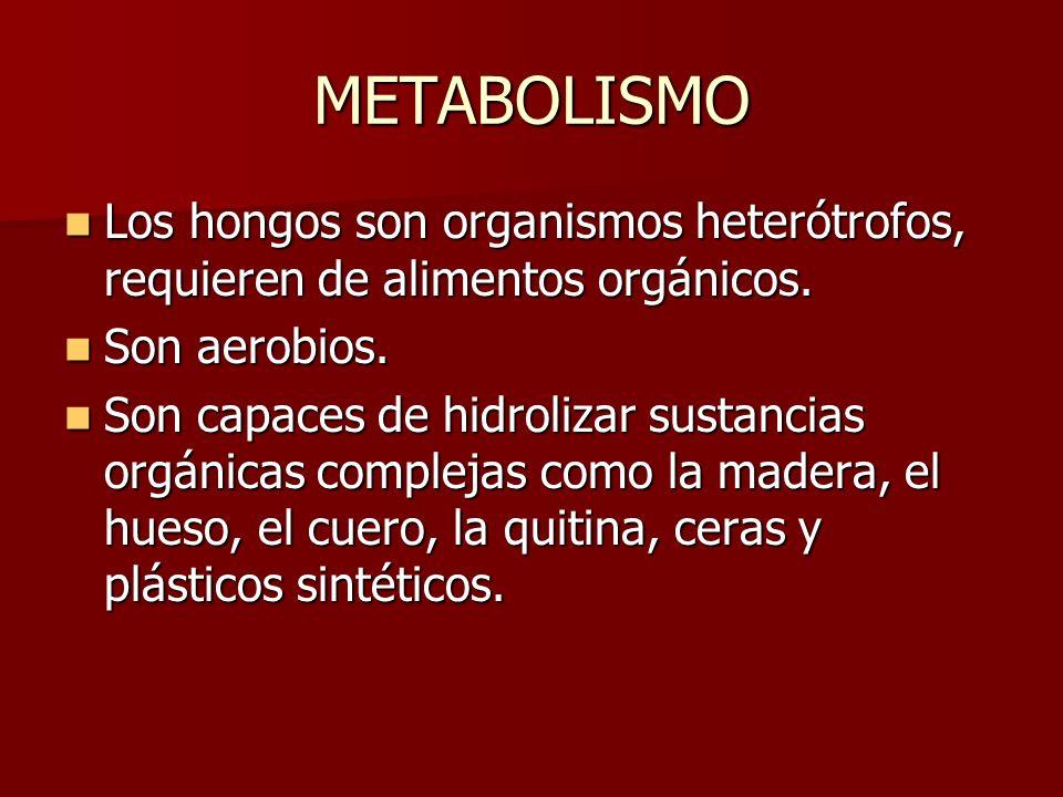 METABOLISMO Los hongos son organismos heterótrofos, requieren de alimentos orgánicos. Los hongos son organismos heterótrofos, requieren de alimentos o