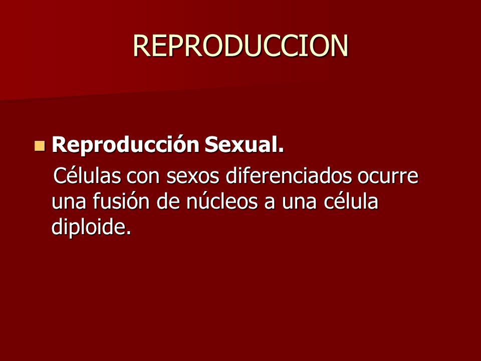 REPRODUCCION Reproducción Sexual. Reproducción Sexual. Células con sexos diferenciados ocurre una fusión de núcleos a una célula diploide. Células con