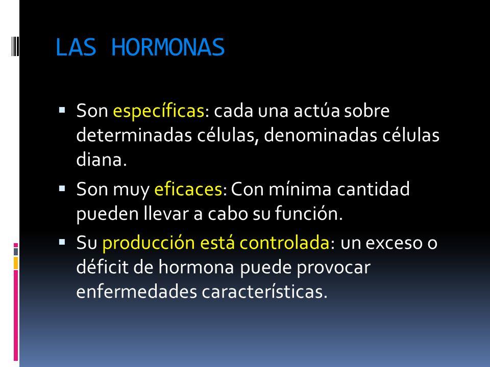 LAS HORMONAS Son específicas: cada una actúa sobre determinadas células, denominadas células diana. Son muy eficaces: Con mínima cantidad pueden lleva