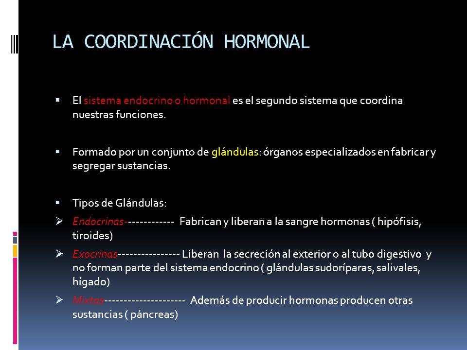 LA COORDINACIÓN HORMONAL El sistema endocrino o hormonal es el segundo sistema que coordina nuestras funciones. Formado por un conjunto de glándulas: