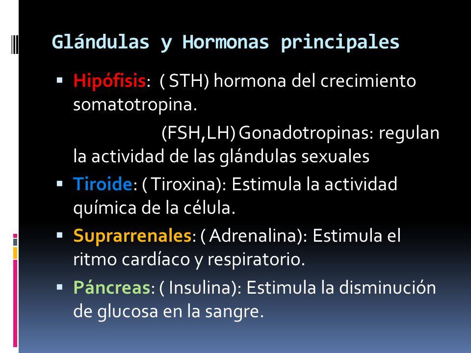 Glándulas y Hormonas principales Hipófisis: ( STH) hormona del crecimiento somatotropina. (FSH,LH) Gonadotropinas: regulan la actividad de las glándul