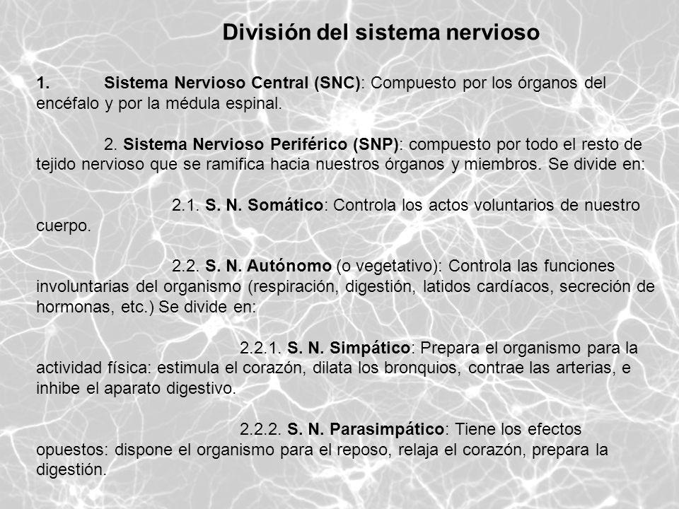 División del sistema nervioso 1.Sistema Nervioso Central (SNC): Compuesto por los órganos del encéfalo y por la médula espinal. 2. Sistema Nervioso Pe