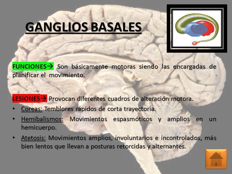 TÁLAMO FUNCIONES Es el encargado de la coordinación sensorial.