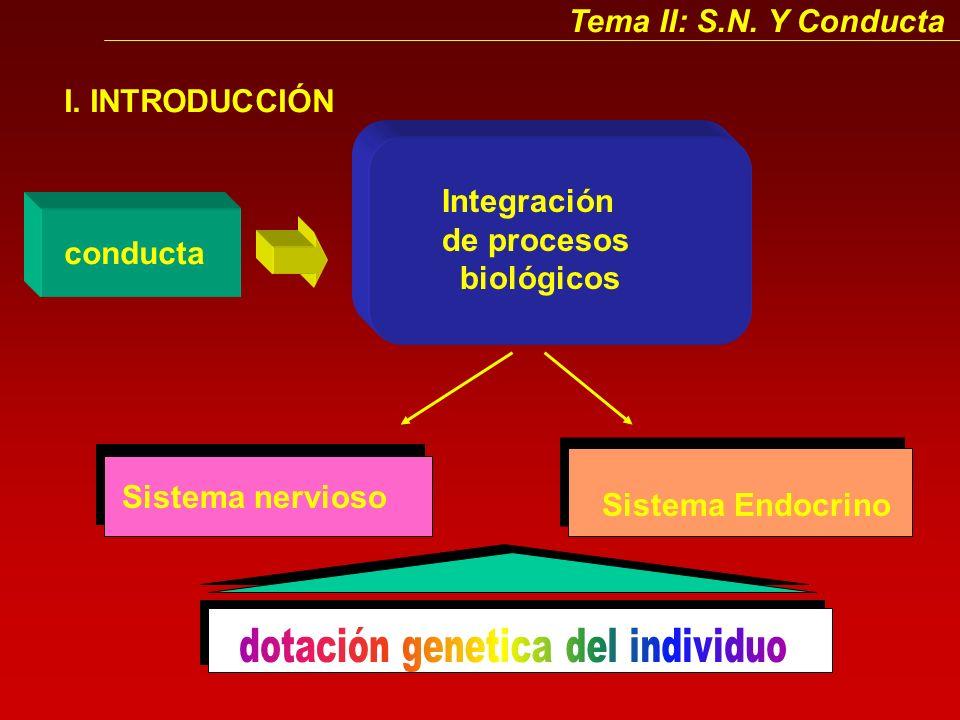 Tema II: S.N.Y Conducta I.