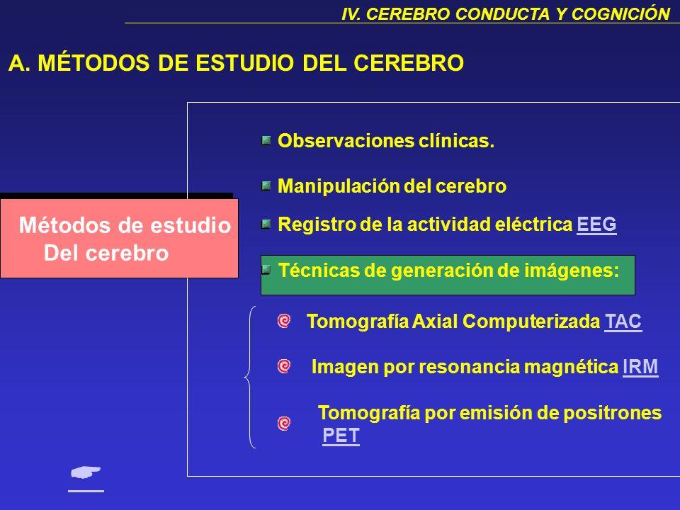 A.Métodos de estudio del cerebro. B.Corteza cerebral: 1. Descripción general. 2. Las áreas corticales y sus funciones C.Sistema límbico: 1. Tálamo. 2.
