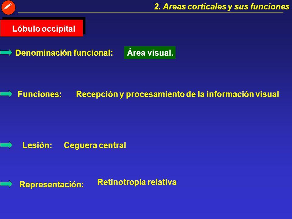 Corteza sensorial Corteza motora