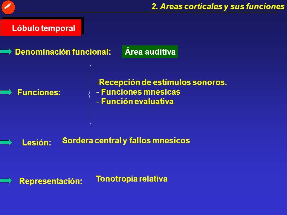 2. Areas corticales y sus funciones Lóbulo occipital Denominación funcional:Área visual. Funciones:Recepción y procesamiento de la información visual