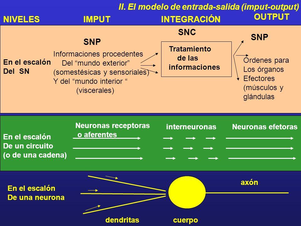 Tema II: S.N. Y Conducta II. El modelo de entrada-salida (imput-output) organismo receptores efectores Imput: Entrada de Información. (S: estimulación