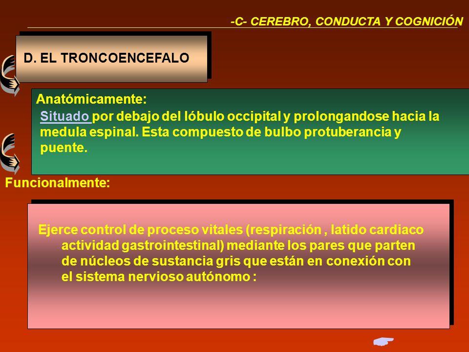 IV.CEREBRO CONDUCTA Y COGNICIÓN D. EL TRONCOENCEFALO E. EL CEREBELO