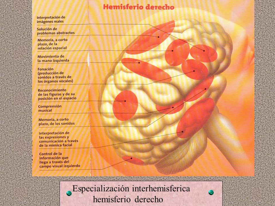 Testeo de cerebro dividido Gazzaniga 1983