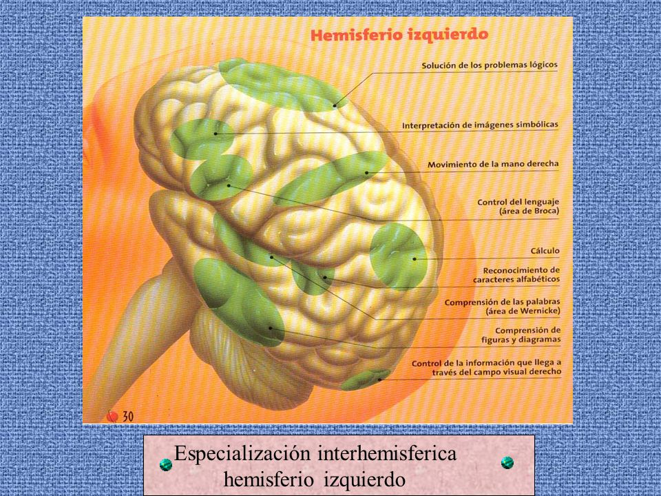 Especialización interhemisferica hemisferio derecho