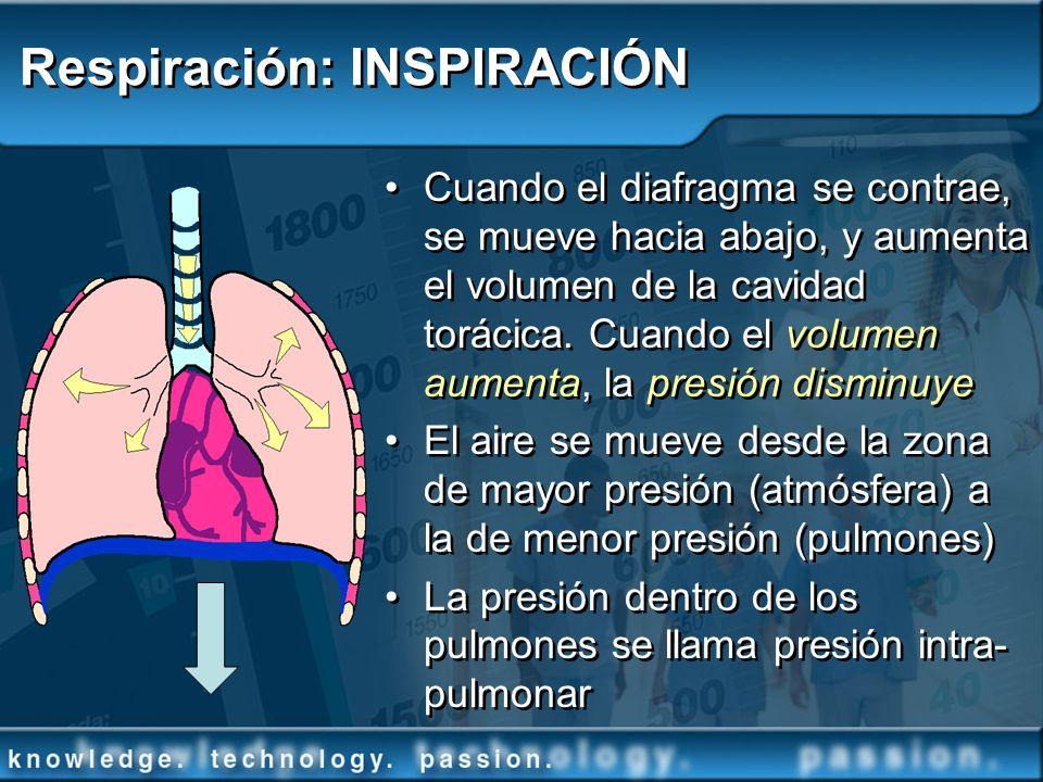 Respiración: INSPIRACIÓN Cuando el diafragma se contrae, se mueve hacia abajo, y aumenta el volumen de la cavidad torácica. Cuando el volumen aumenta,