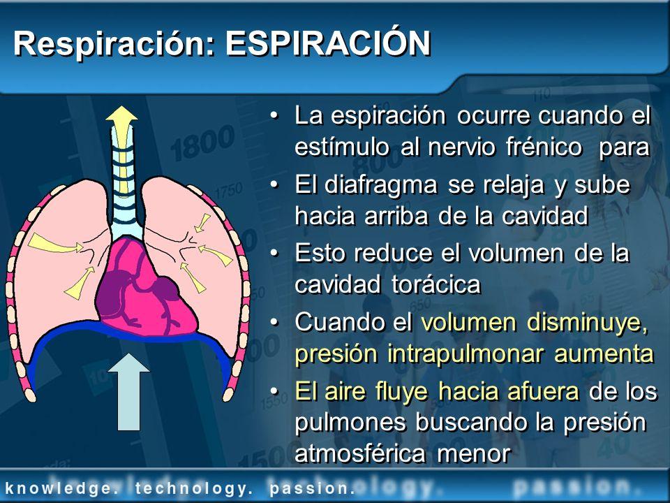 Respiración: ESPIRACIÓN La espiración ocurre cuando el estímulo al nervio frénico para El diafragma se relaja y sube hacia arriba de la cavidad Esto r