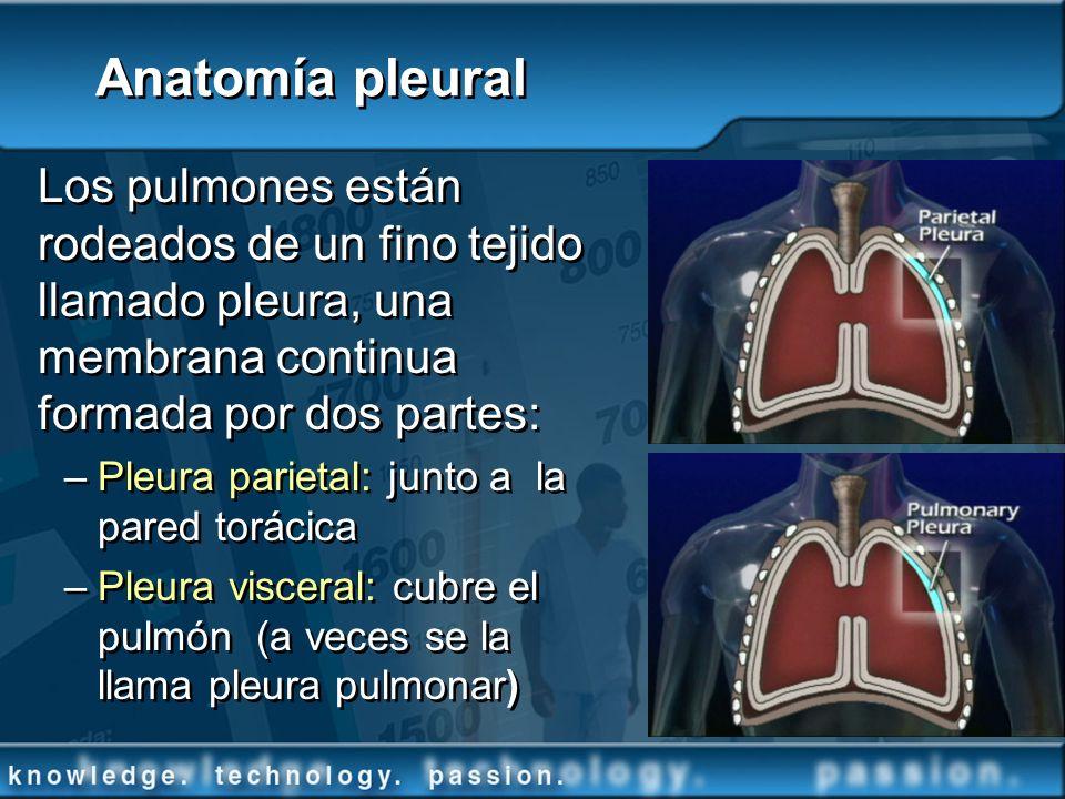 Los pulmones están rodeados de un fino tejido llamado pleura, una membrana continua formada por dos partes: –Pleura parietal: junto a la pared torácic