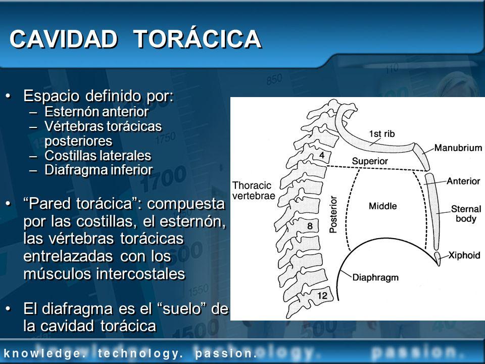 CAVIDAD TORÁCICA Espacio definido por: –Esternón anterior –Vértebras torácicas posteriores –Costillas laterales –Diafragma inferior Pared torácica: co