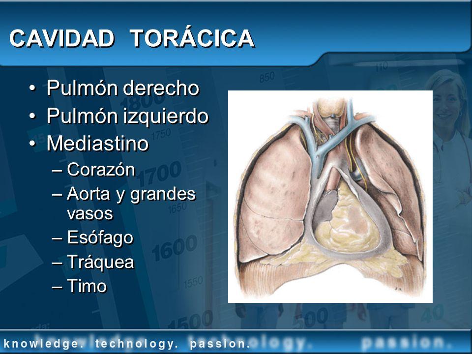 CAVIDAD TORÁCICA Pulmón derecho Pulmón izquierdo Mediastino –Corazón –Aorta y grandes vasos –Esófago –Tráquea –Timo Pulmón derecho Pulmón izquierdo Me