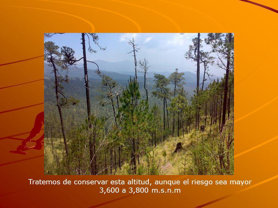 Tratemos de conservar esta altitud, aunque el riesgo sea mayor 3,600 a 3,800 m.s.n.m