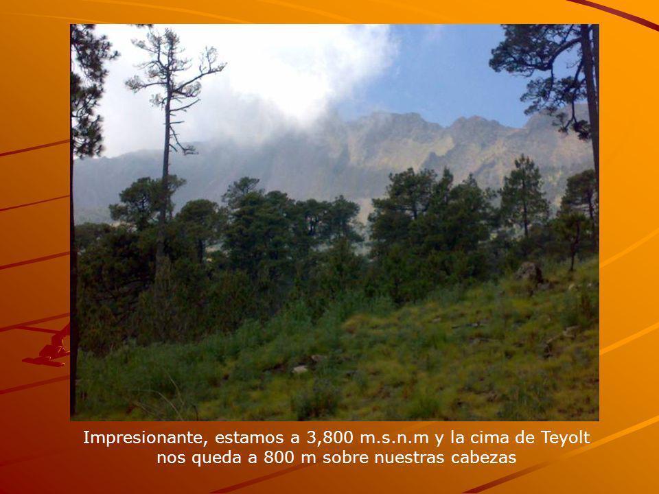Impresionante, estamos a 3,800 m.s.n.m y la cima de Teyolt nos queda a 800 m sobre nuestras cabezas