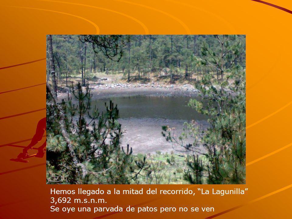 Hemos llegado a la mitad del recorrido, La Lagunilla 3,692 m.s.n.m. Se oye una parvada de patos pero no se ven