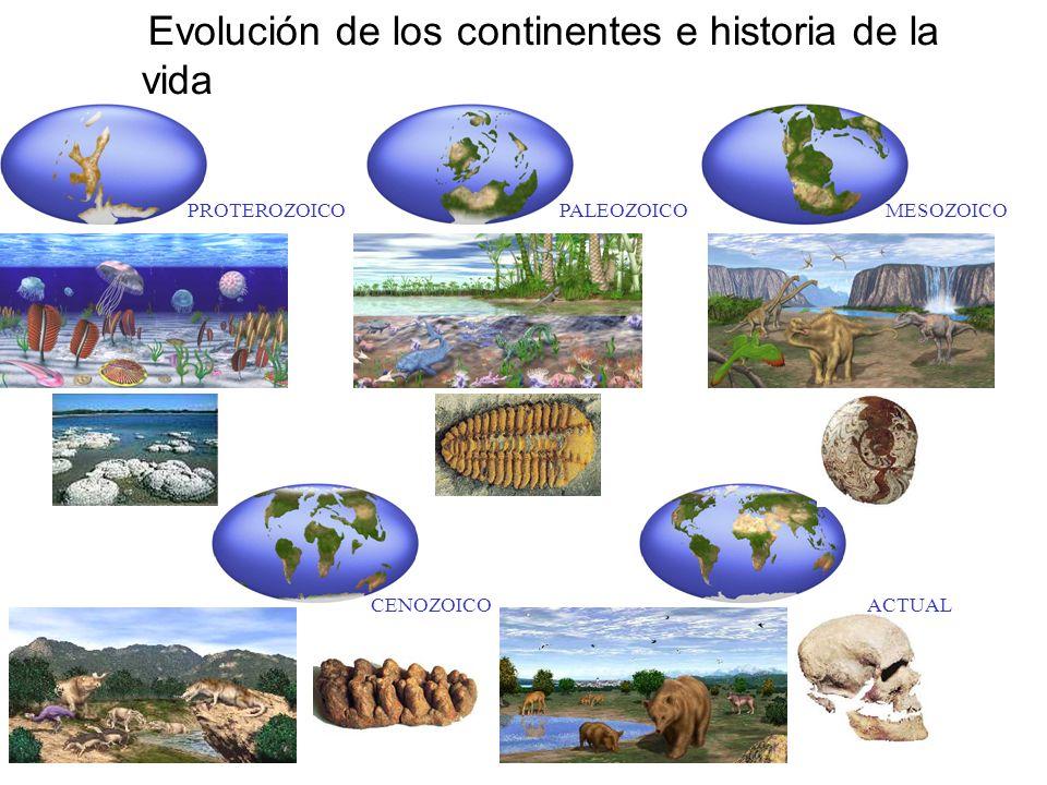 Evolución de los continentes e historia de la vida PROTEROZOICOPALEOZOICOMESOZOICO CENOZOICOACTUAL